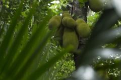 Jardin aux épices de Matale