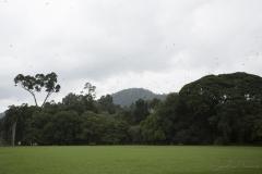Les Jardins de Peradeniya