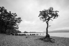 Milarrocky bay